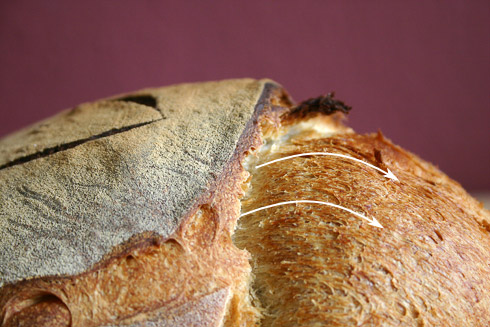 Das Brot konnte dem internen Druck nicht mehr standhalten und riss auf. An dieser Stelle wurde der noch zähflüssige Teig ausgedrückt und dabei rotiert.