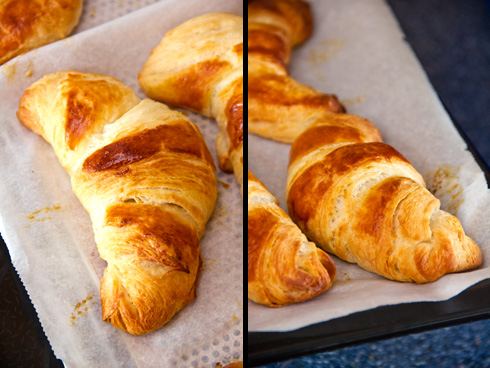 Knusprig und butterig-süß im Geschmack: Croissants mit Poolish nach Michel Suas