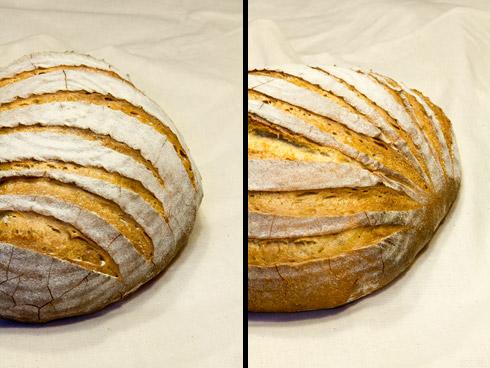 Das Wiener Farb-Brot - ein sehr mild-würziges Weizenmischbrot.