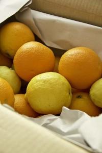 Eine Kiste voll erntefrischer Zitrusfrüchte.