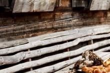 Feingebäck aus dem Holzbackofen auf der Kalchkendlalm im Rauriser Tal