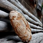 Alm-Rezepte: Kärntner Bauernbrot