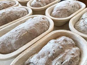Stückgare der Rotkorn-Kartoffel-Walnuss-Brote